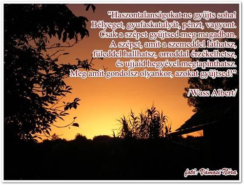 wass albert idézetek szerelem Haszontalanságokat ne gyűjts soha! | Csodás élet